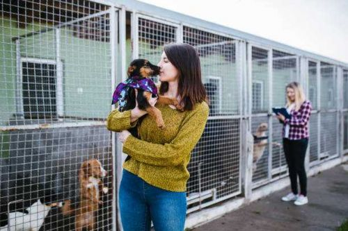 Americans rediscover love of pets amid coronavirus lockdown; foster adoptions increase