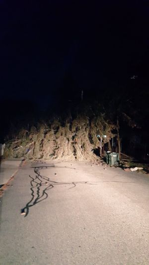 School canceled in Hopkinton after wild winds down tree, power lines