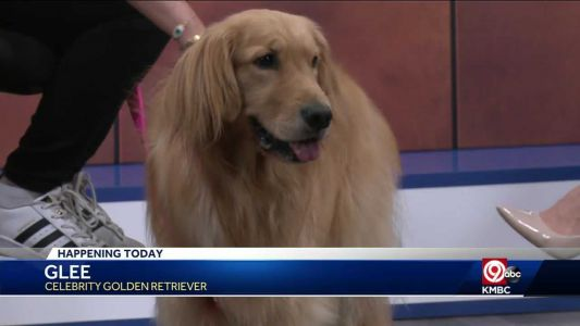 Glee the Golden Retriever is on mission to 'bring joy' with Kansas City with tour stop