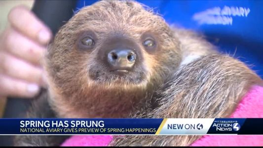 Baby sloth, Black Kites and butterflies! National Aviary shows off summer attractions in Pittsburgh