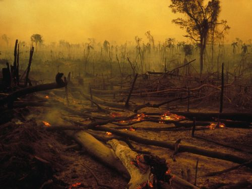 The Amazon Rainforest is burning. Here's why there are so many fires and what it all means for the planet