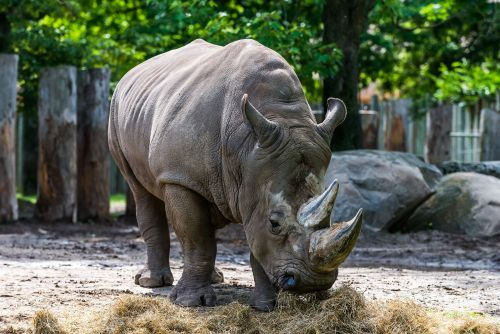 Vandals carve their names into a rhino's back at French zoo