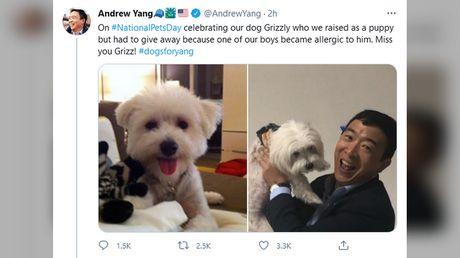 'Could have said nothing': Andrew Yang scorned after he tries to jump on NationalPetsDay trend with pic of dog he 'gave away'