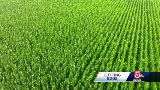 Local lab using genetics to change how crops are grown