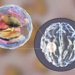Mouse Study: How Infections in Pregnancy May Be Linked to Psychiatric Disorders