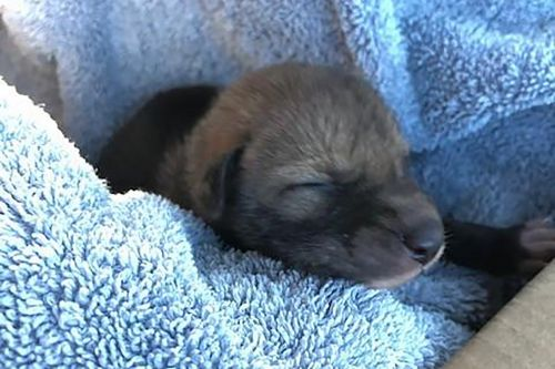 Hiker finds cute 'puppy,' but gets one howl of a surprise