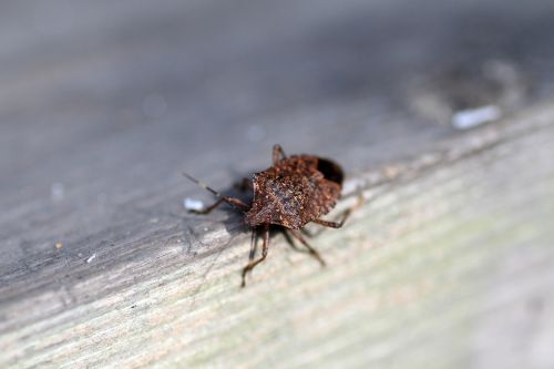 Polar vortex may have killed off some of the worst insects