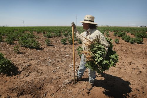 Who is 'essential'? Food and farm workers left in limbo in vaccine priorities