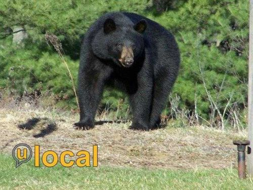 Bear put down after stealing food from campsites, officials say