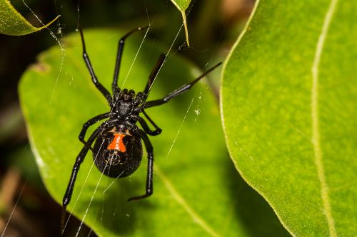 Whole Foods worker fired over trauma of black-widow spider bite: lawsuit