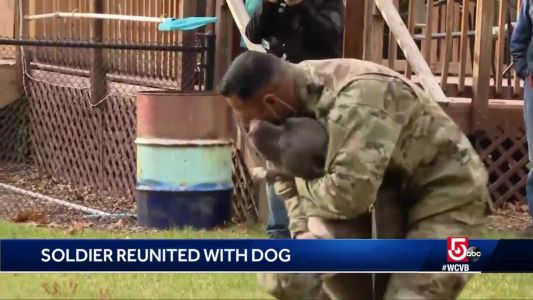 VIDEO: Air Force Sergeant reunites with dog after deployment