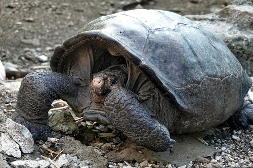 Turtle species thought long extinct found alive and well
