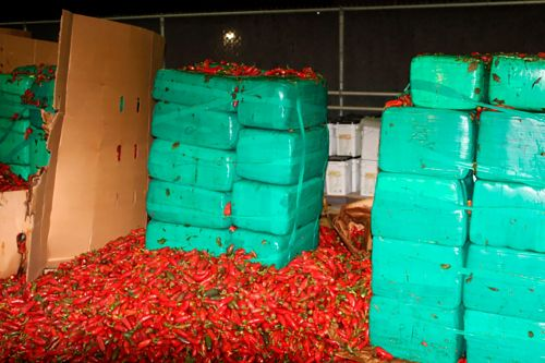 Four tons of marijuana hidden underneath jalapeños seized at border