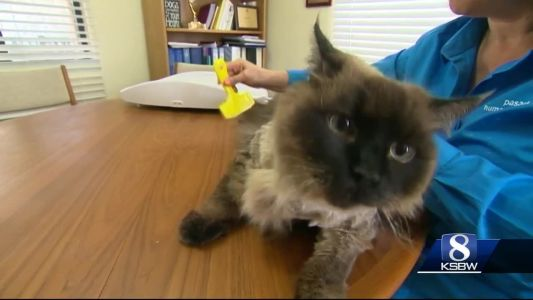 Animal Stories with Dan Green: chubbs gets a home