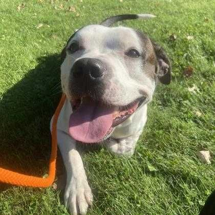 Pet of the week - Coco