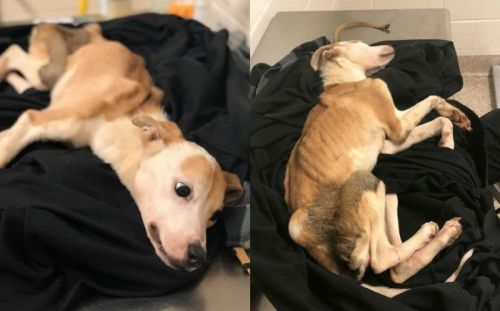 Emaciated puppy found under piles of trash fighting for its life