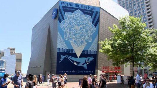 New mural at New England Aquarium in Boston painted by Shepard Fairey