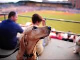 Events this week: Bark in the Park, Brad Paisley