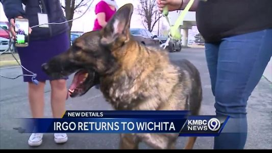 Dog that accidentally ended up in Japan now back home in Kansas