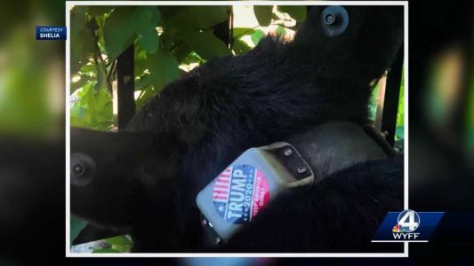Person apologizes for putting Trump 2020 sticker on Asheville bear, group says