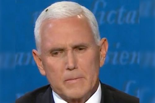 Fly lands on Pence's head, steals the show during VP debate