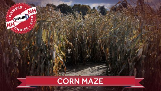 Viewers' Choice 2018: Best corn maze