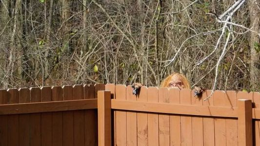 Is that Bigfoot? Something hairy's going on in these real estate photos