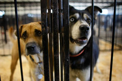 15 reasons why you should adopt a shelter dog