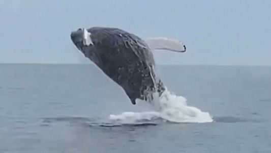 Whale of a tale: Close encounter with humpback off Mass. coast