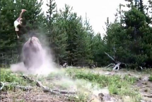 Watch bison launch 9-year-old girl into the air at Yellowstone