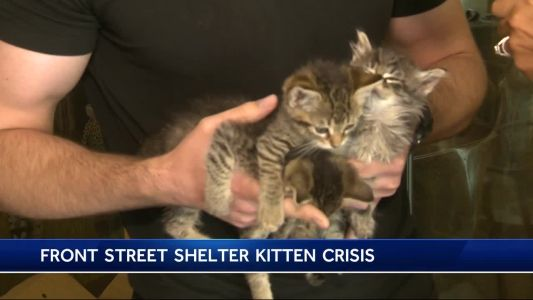 Wanted: Foster families for kittens too young for Sacramento shelter