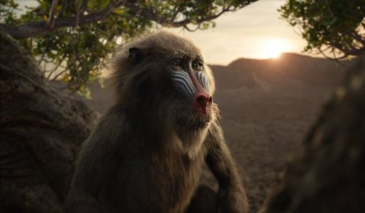 Here's How the New Lion King Is Different From the Original