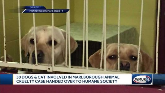 50 dogs, 1 cat involved in Marlborough animal cruelty case surrendered to humane society