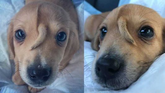 'Unicorn puppy' will stay with rescue mission that saved him