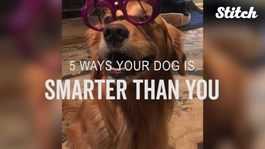 This video proves your dog is probably smarter than you
