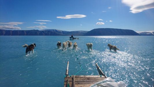 These photos of sled-dogs trekking through meltwater in Greenland are a stark reminder of vanishing Arctic sea ice