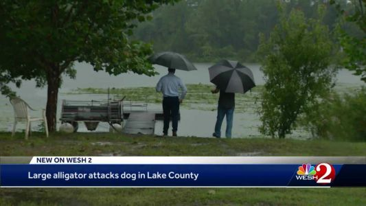 Alligator snatches dog, pulling it into Central Florida lake