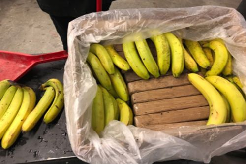 'Cocaine bananas' shipped to grocery stores in botched operation