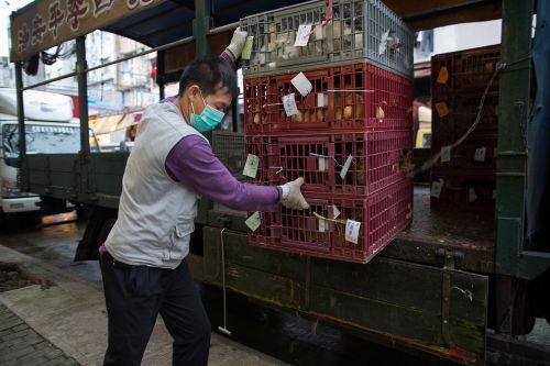 WHO urges pause in market sale of captured live wild animals