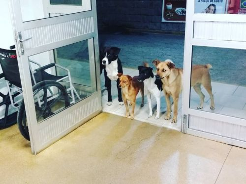 When a homeless man was admitted to a hospital, his 4 stray dog friends patiently waited for him at the door