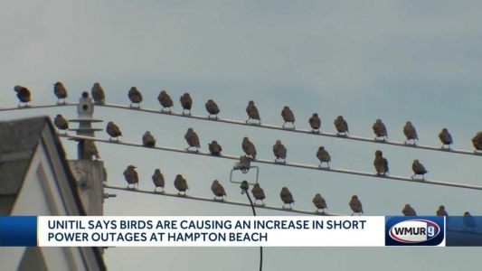 Beach community's nearly daily power outages blamed on birds