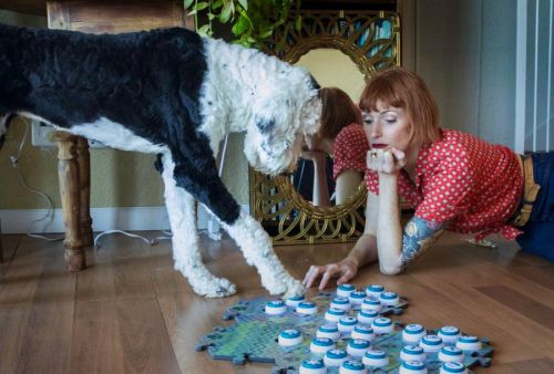 Dog earns 6M followers while learning to communicate with humans