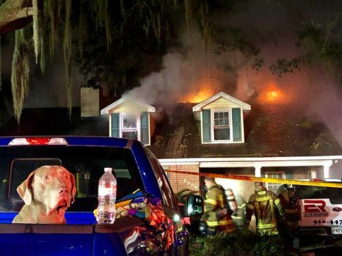 Good dog! Sammy the dog saves 5 people from house fire in Georgia