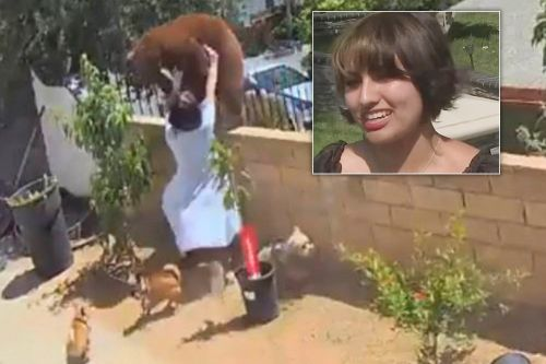 California girl who saved dogs didn't realize she had shoved a bear