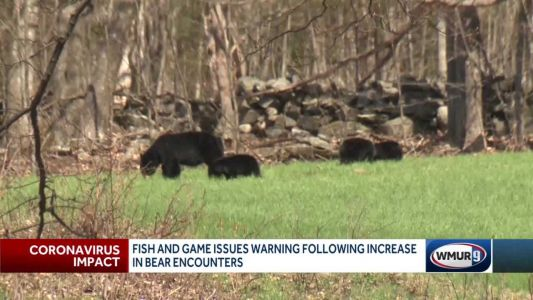 Fish and Game issues warning, following increase in bear encounters