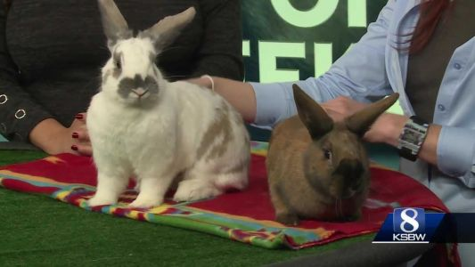 KSBW Pets of the Weekend: Cutie and Sister!