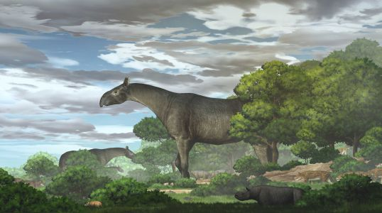 A giant prehistoric rhino recently discovered was the biggest land mammal to walk the Earth