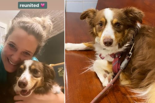 NYC doctor finds missing dog locked in neighbor's apartment