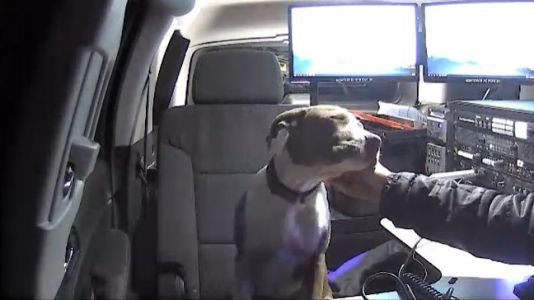 Cold puppy looking for warmth in Texas chased news photographer, so she took it in to warm up