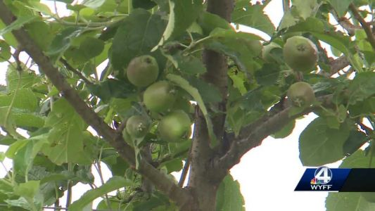 Henderson County apple farmers discuss impact of recent severe weather